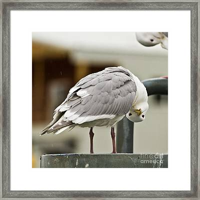 Who You Lookin At Framed Print