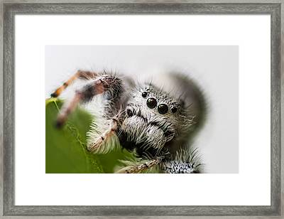 Who You Looking At  Framed Print by Craig Lapsley