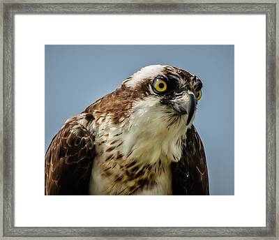 Framed Print featuring the photograph Whoa Is Me by Linda Karlin