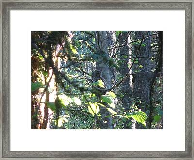 Whoo Goes There? Framed Print