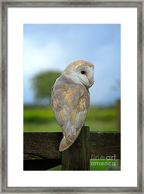 Whoo Me Framed Print by Louise Heusinkveld