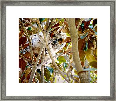 Whooo Are You? Framed Print