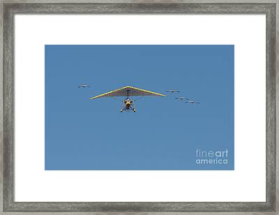 Whooping Cranes And Operation Migration Ultralight Framed Print by Paul Rebmann