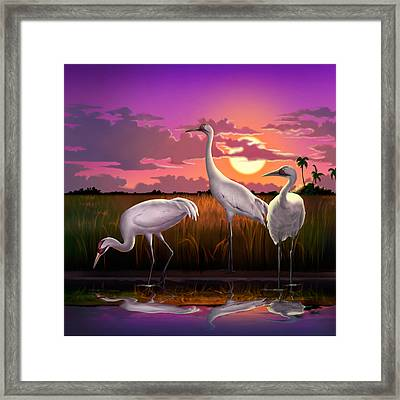 Whooping Cranes At Sunset Tropical Landscape - Square Format Framed Print