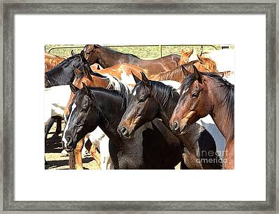 Who's Next Framed Print
