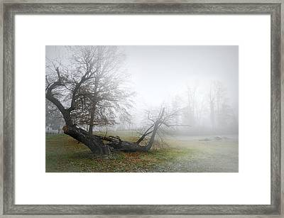 Who's Sorry Now Framed Print by Diana Angstadt