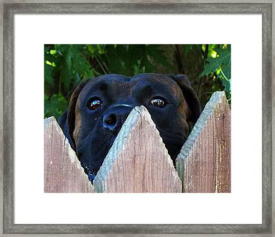 Framed Print featuring the photograph Who's There by B Wayne Mullins