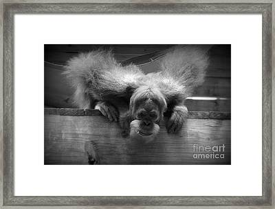 Who's There? Framed Print by Lisa L Silva