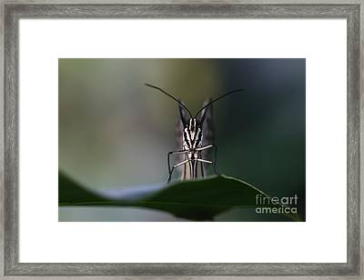 Who's Watching Who Framed Print by Wobblymol Davis