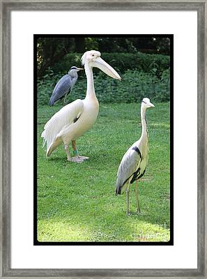 Why Am I So Different... Framed Print by Jackie Mestrom