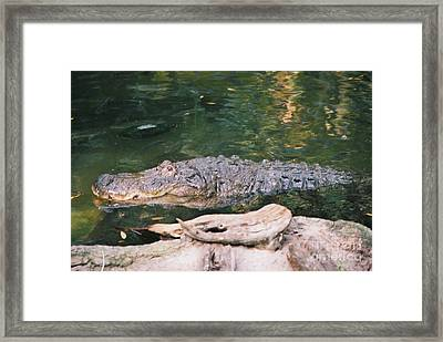 Why Are You Smiling? Framed Print