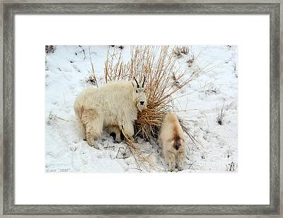 Why Are You Watching Me Framed Print
