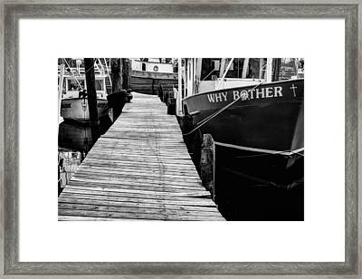 Why Bother Framed Print by JC Findley