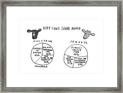 Why Cows Leave Home Framed Print by Michael Crawfor