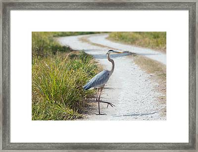 Why Did The Heron Cross The Road Framed Print by John M Bailey