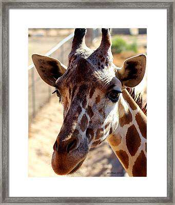 Why Hello There Framed Print by Dick Botkin