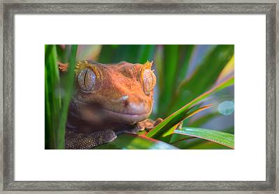 Why Hello0 Framed Print