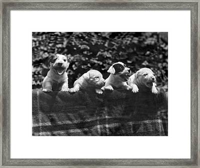 why I Love A Dog Prizes Framed Print by Underwood Archives