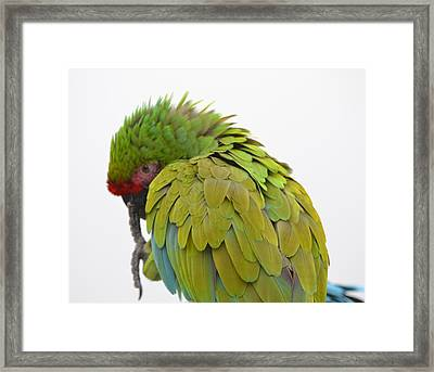 Why So Shy Framed Print by Kiros Berhane