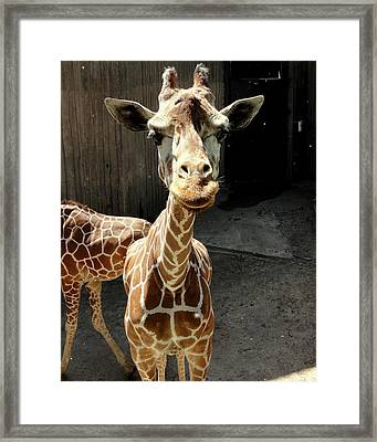 Why The Long Neck? Framed Print