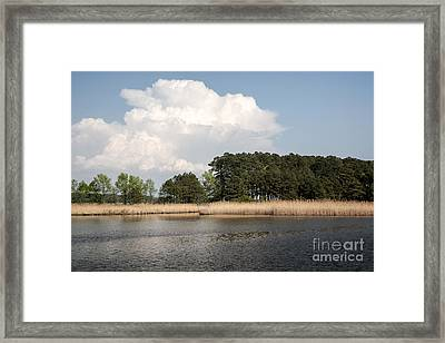 Why They Call It The Blackwater Wildlife Refuge Framed Print by William Kuta
