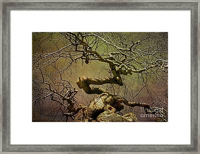 Wicked Tree Framed Print