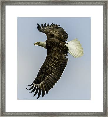 Wicket Wing Span  Framed Print by Glenn Lawrence
