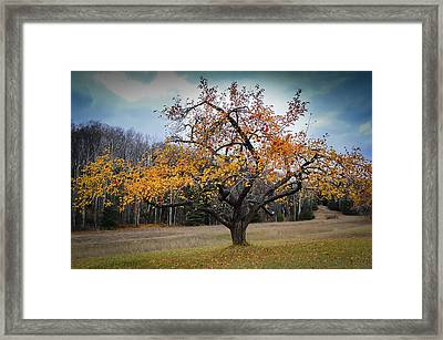 Wide As A Wolf River Framed Print by Christopher Burnett