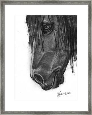 Wide Eyed Wanderer Framed Print by J Ferwerda