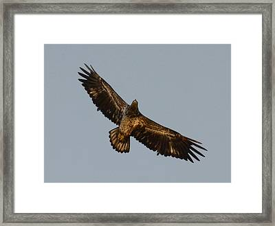Wide Open Framed Print by Julie Cameron