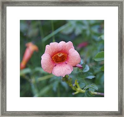 Wide Open Framed Print