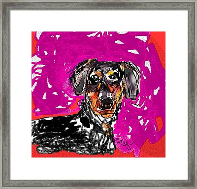 Wiener Dog Framed Print