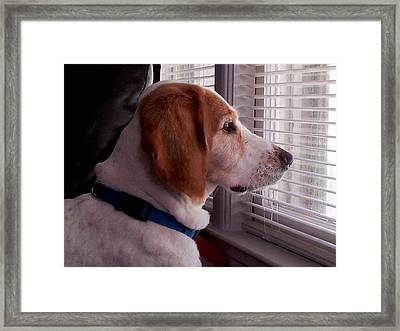 Wiggles  Framed Print by Mark Moore
