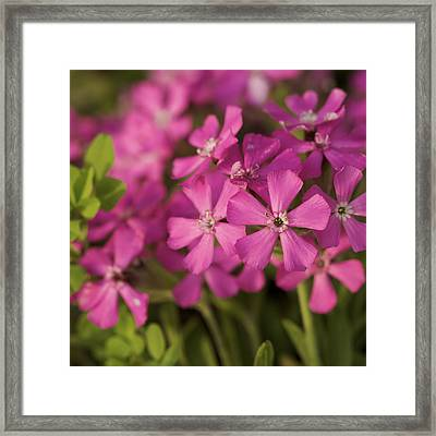 Framed Print featuring the photograph Wild About Pink - Pink Wildflower Art Print by Jane Eleanor Nicholas