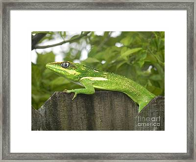 Wild About You Framed Print by Chrisann Ellis