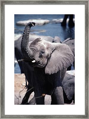 Wild African Elephant In The Etosha Framed Print