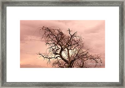 Wild Afternoon Framed Print