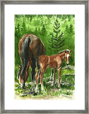 Wild Alberta Mare And Foal Framed Print