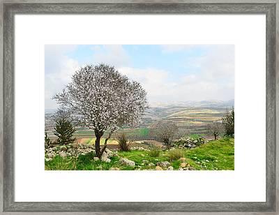 Wild Almond Tree In Beautiful Scenery Framed Print