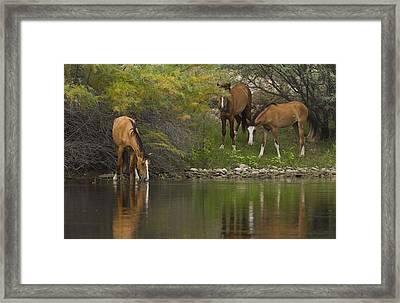 Wild Along The River Framed Print