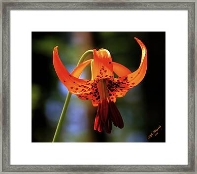 Wild And Beautiful Framed Print by Jeanette C Landstrom
