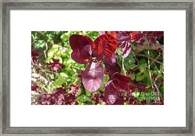Wild And Beautiful Framed Print by Julie Koretz