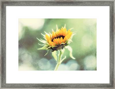 Wild And Free Framed Print by Amy Tyler