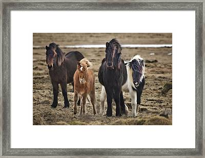 Wild And Free Framed Print by Evelina Kremsdorf