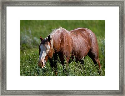 Wild And Free Framed Print by Jeanie Eaton