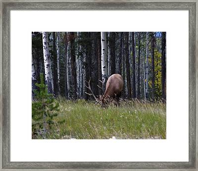 Framed Print featuring the photograph Wild And Free by Rhonda McDougall