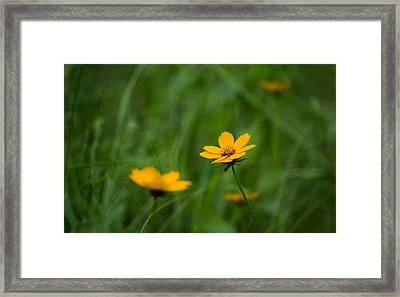 Wild And Free Framed Print by Shelby  Young