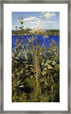 Wild Angelica Framed Print by Mountain Dreams