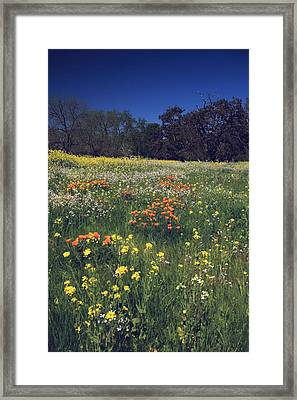 Wild At Heart Framed Print by Laurie Search