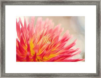 Wild At Heart Framed Print by Beve Brown-Clark Photography